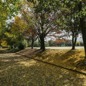 (公園)五町公園_西区周辺
